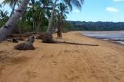 plage devant terrains